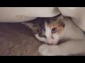 Cat's hide and seek にゃんこのかくれんぼ