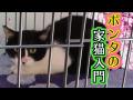 ポンタの家猫入門